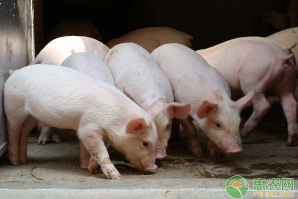 生猪日评:猪价南北齐涨 收复5月反弹高点