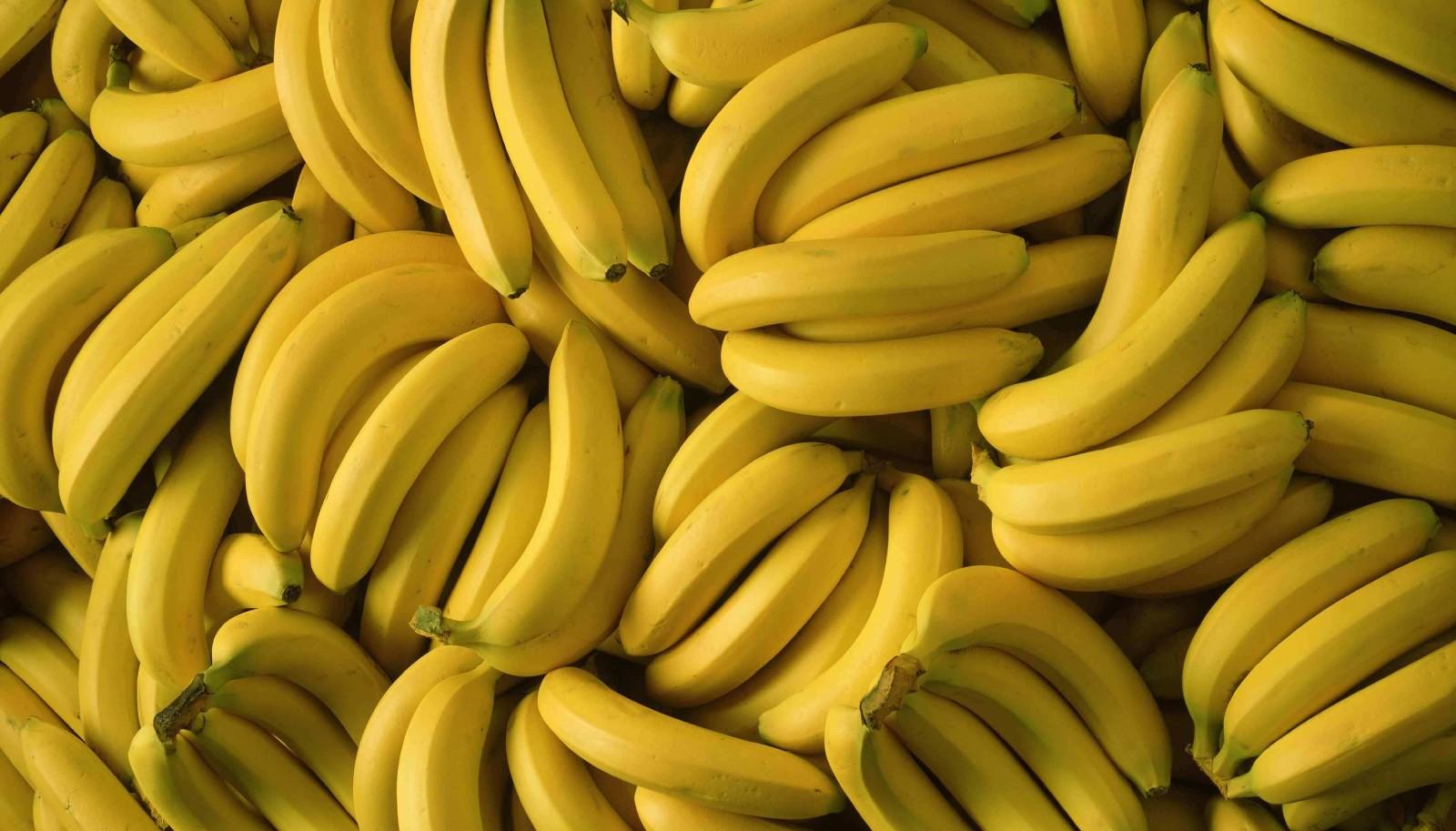 香蕉多少钱一斤?6月17日香蕉主产区收购价格行情