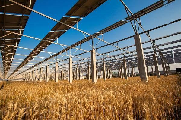 小麦价格多少钱一斤?2018年端午节小麦收购价格最新行情