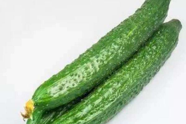 今日黄瓜收购价格如何?6月22日黄瓜主产区收购行情