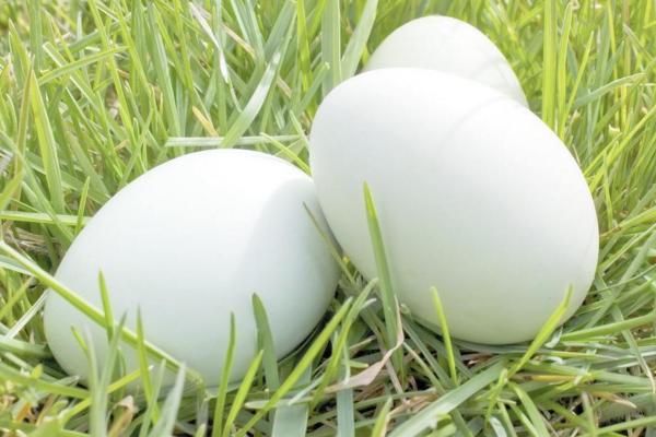 今日鸡蛋多少钱一斤?6月23日鸡蛋价格行情分析
