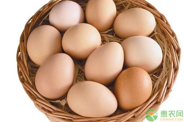 7月3日鸡蛋价格行情汇总