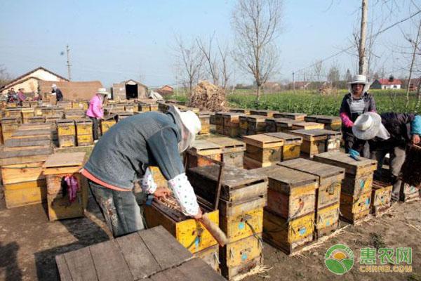 中蜂活框养殖