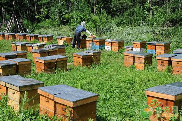 蜜蜂活框养殖