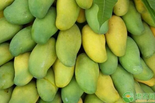 芒果叶片上出现的黄白色斑