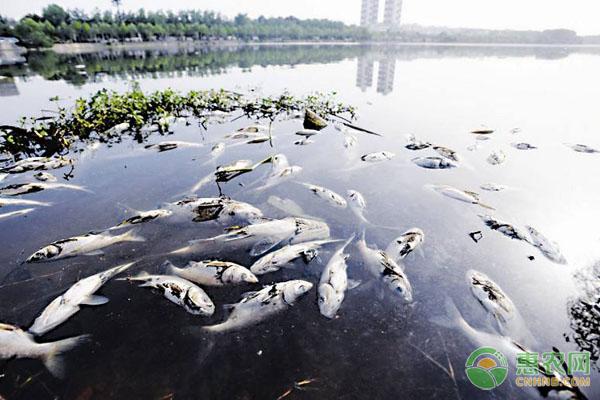 养鱼翻塘原因