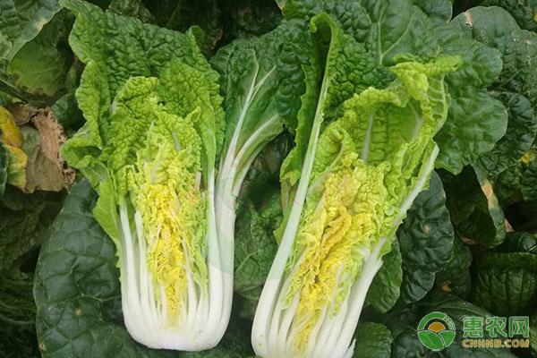 快菜家庭种植