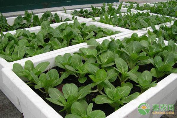 快菜种植方法