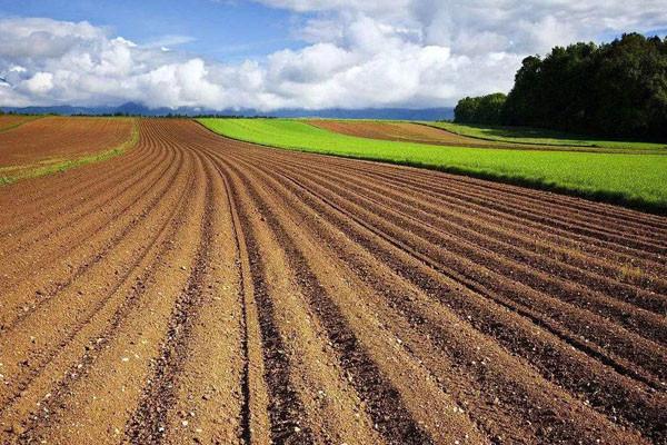农民不种地也能拿补贴!今年国家拨付50.9亿轮作休耕补贴如何发放?
