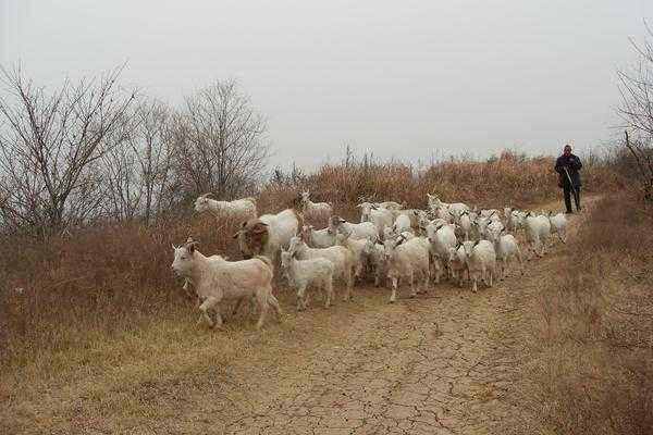 翁山村:大力发展养羊业摘下贫困帽