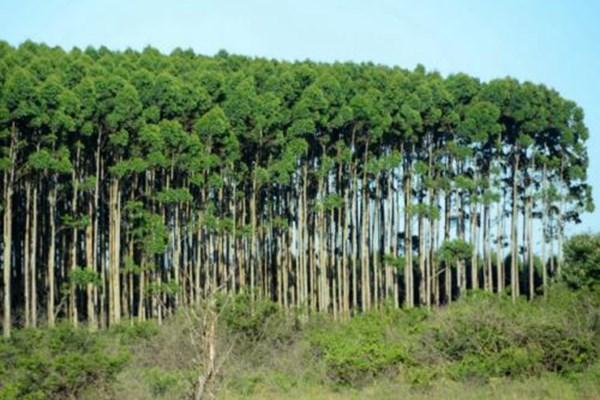 种植林木国家给补贴吗?滁州市林业补贴政策全汇总