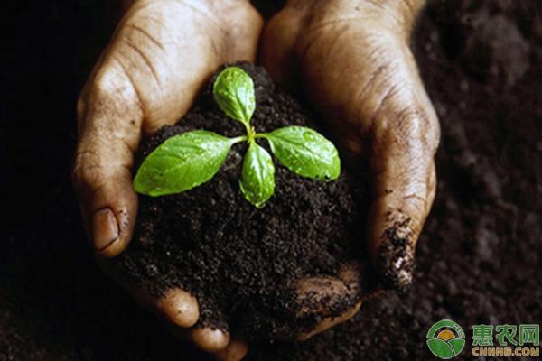 微生物菌肥在农业生产中的功能应用