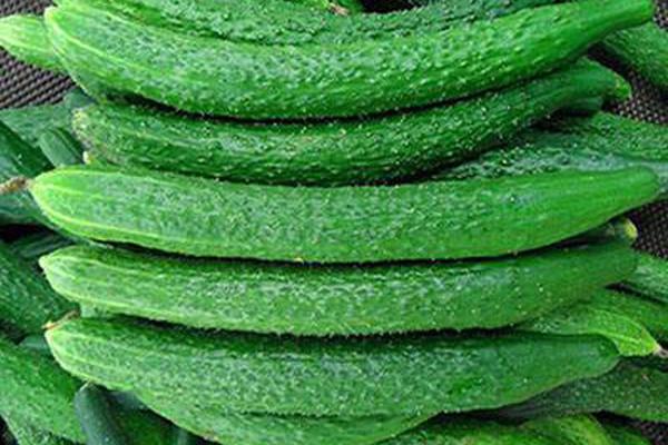 7月19日黄瓜主产区市场收购价格汇总
