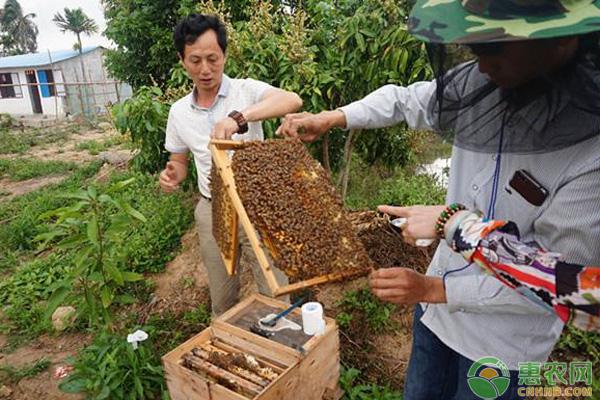 蜜蜂养殖被蛰预防