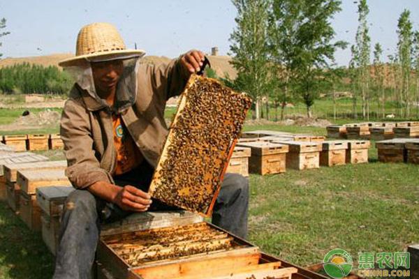 蜜蜂养殖被蛰注意事项