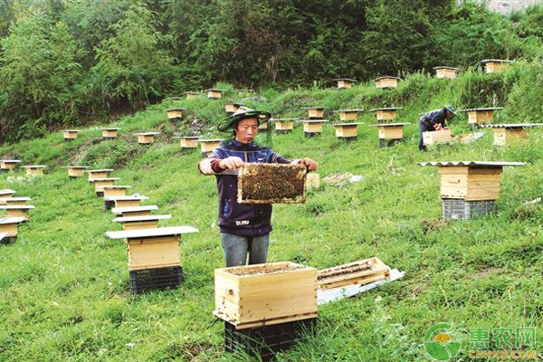蜜蜂养殖避免被蛰