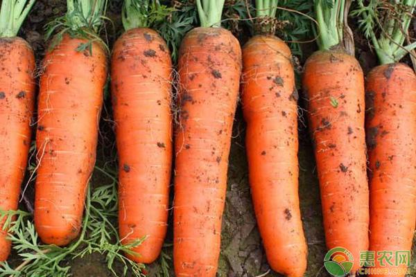 胡萝卜种植方法