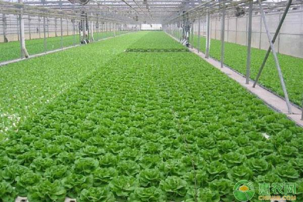 浅谈我国设施农业发展现存问题及发展趋势