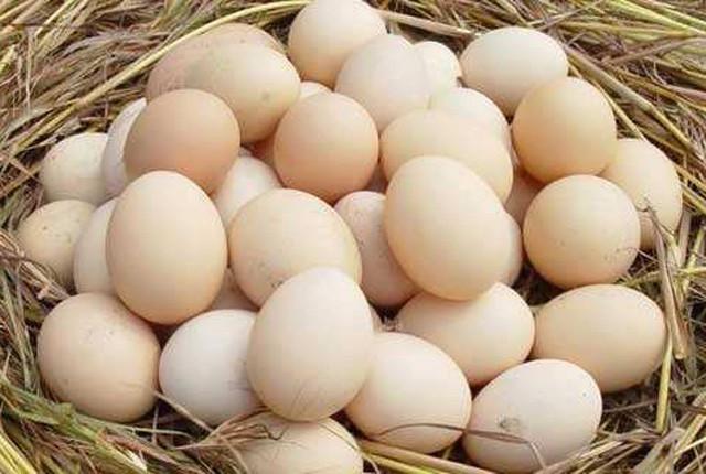 今日鸡蛋什么价?8月19日鸡蛋价格行情汇总
