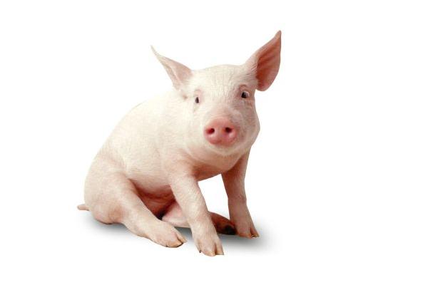 8月18日全国生猪价格行情:跌势蔓延,下跌地区扩大