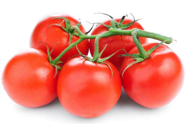番茄种植中常见病害原因解析