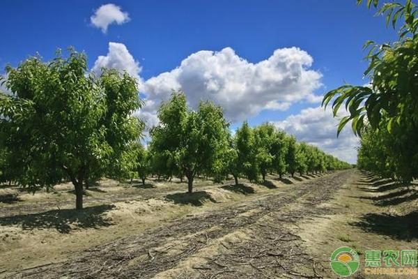 果园基肥有哪些?怎么施?秋季果园基肥喷施管理技巧