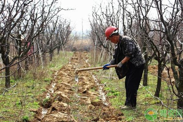 秋季果园基肥喷施管理技巧
