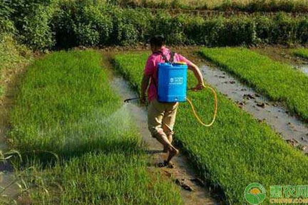 水稻除草剂二甲四氯钠