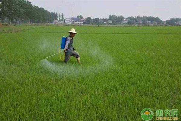 水稻除草剂