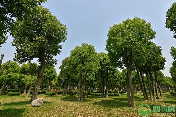 苗木常见地下害虫及其防治方法