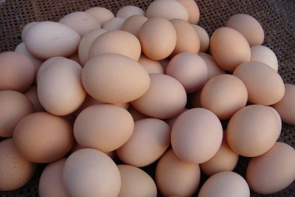 中秋、国庆双节临近,鸡蛋价格多少钱一斤?2018最新鸡蛋收购价格
