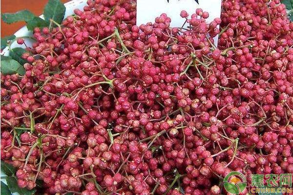 秋冬季青花椒落叶的原因及其防治措施