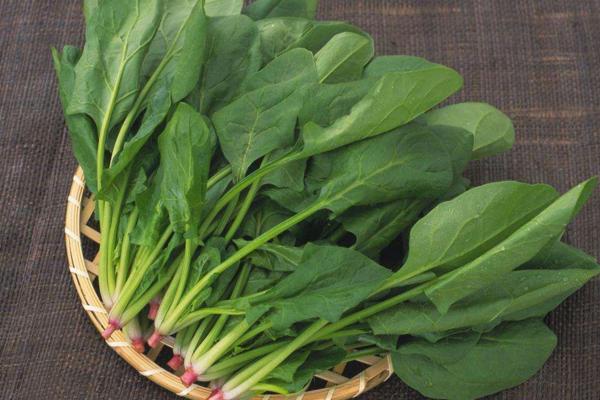 菠菜高产优质需肥有何特性?菠菜高产优质需肥特性讲解