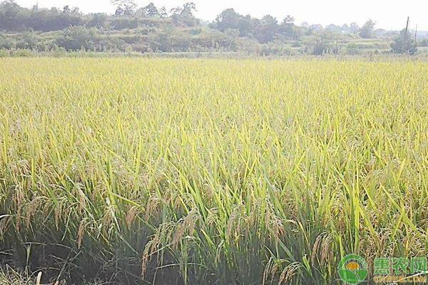 常用化肥磷酸二氢钾的作用