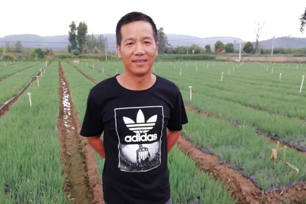 云南小伙种植香葱,年单亩创收36000元,看看他怎么做到的!