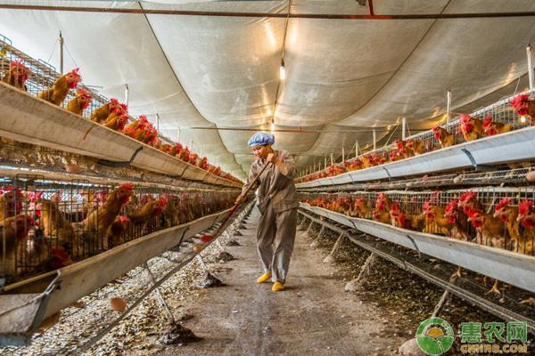 秋冬养鸡场应对措施