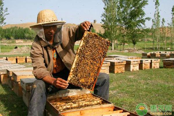 蜜蜂越冬管理