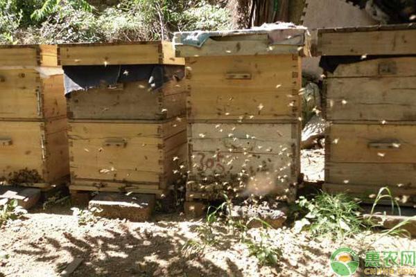 蜜蜂越冬分辨方法