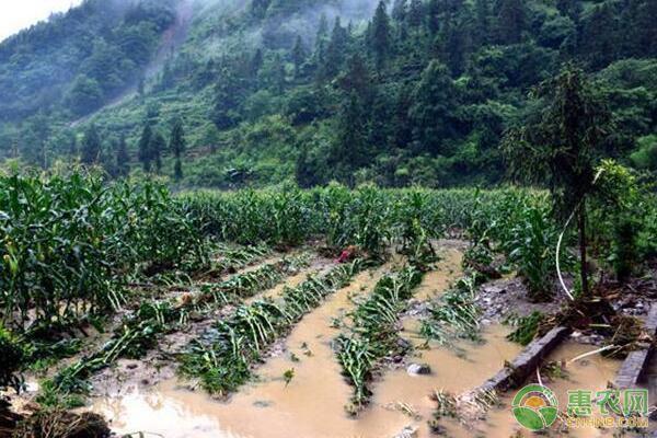 面对农业自然灾害,我们该如何做好防灾减灾救灾工作?