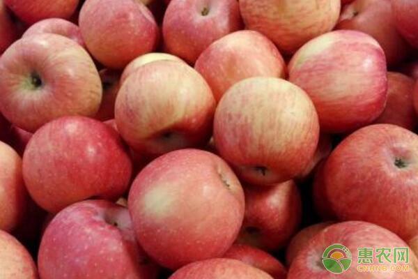 老苹果园如何提质增效?老苹果园开心嫁接技术要点