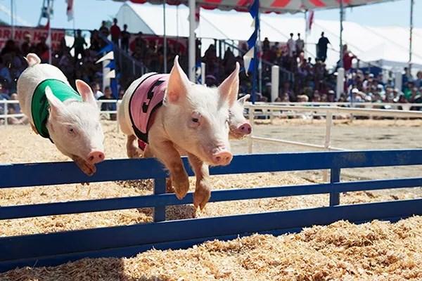 非洲猪瘟是通过什么途径传到中国的?通过进口肉的可能性大吗?