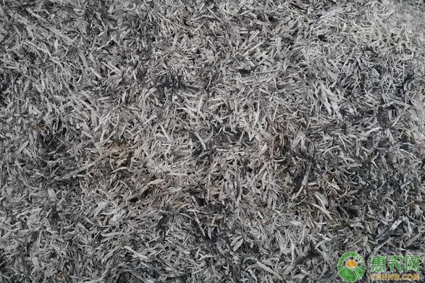 草木灰做肥料