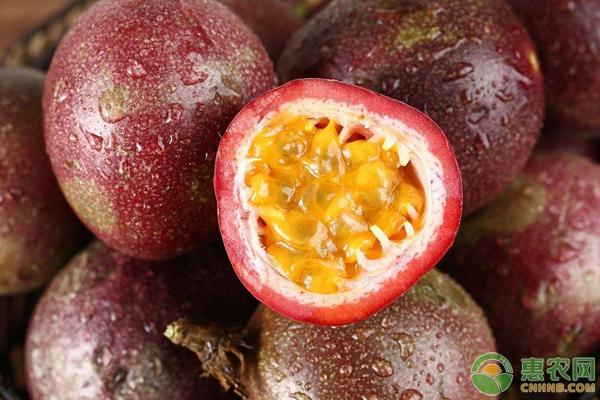 适合秋天播种的4种水果