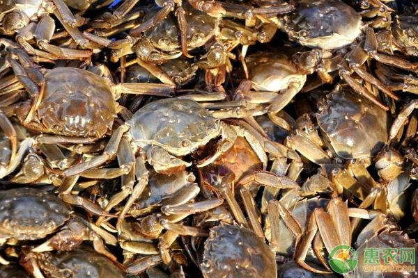 螃蟹的养殖技术