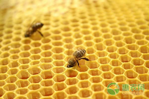 人工分蜂需要具备什么条件
