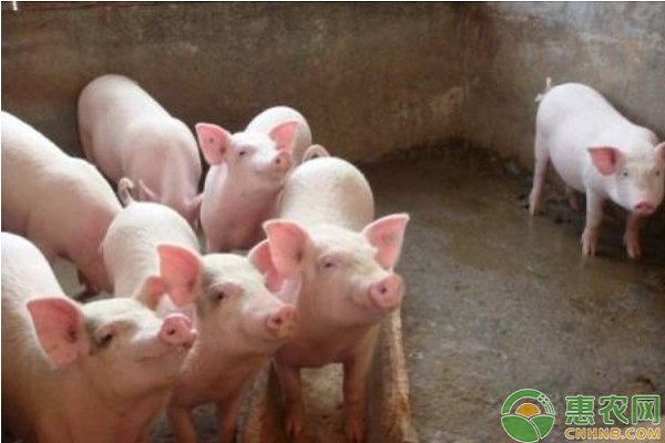 非洲猪瘟的传播途径及防控