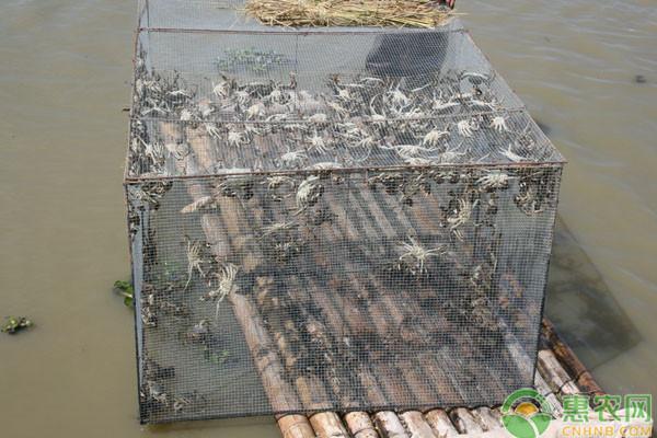 河蟹池塘水草常见问题及处理方法
