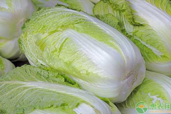 大白菜栽培要点