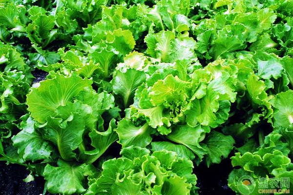 阴雨天蔬菜管理要点
