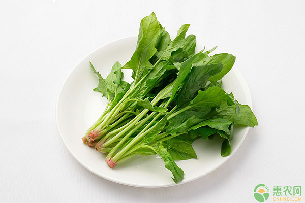 菠菜种植中,不同季节各有哪些管理方法?-盆景植物